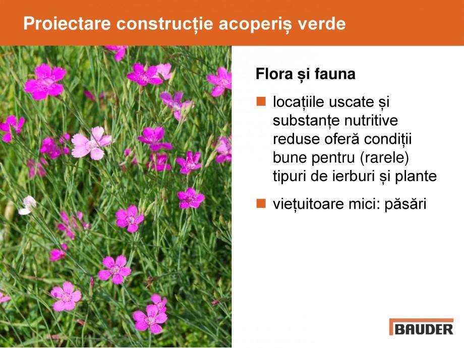 Pagina 36 - Acoperis cu vegetatii extensive si intensive   BAUDER Catalog, brosura Romana