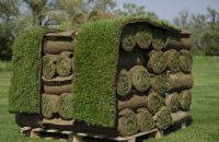 Gazon rulou Din anul 2000 GAZONUL SRL a testat si utilizat seminte in producerea de gazon covor, lucrari de amenajare terenuri de sport, golf, parcuri si gradini private.