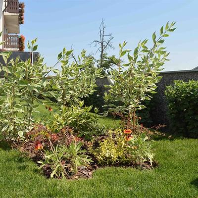 29 Imagini In Categoria Curte Gradina Amenajari Exterioare De La Gazonul Brasov De Tipul Plante Flori Spatiulconstruit Ro Curte Gradina
