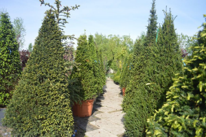 Plante ornamentale pentru gradina Gazonul Brasov dispune de o gama larga de plante ornamentale ce incadreaza perfect imaginea de ansamblu a gradinii cu o varietate larga de forme si culori.