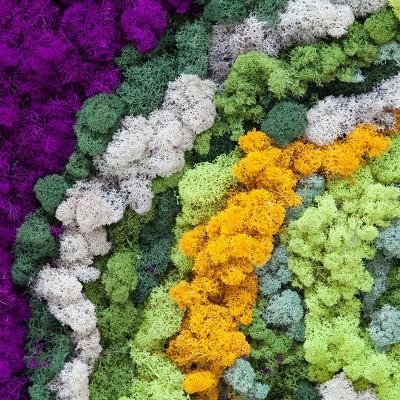 homeco Nuante de licheni - Pereti cu licheni decorativi homeco