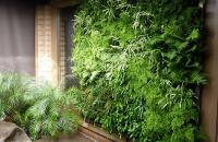 Pereti verzi si gradini verticale Homeco foloseste un sistem de gradini verticale semi-hidroponic. Acest sistem este compus din alimentare cu apa proaspata de la reteaua publica de utilitati, alimentare cu energie electrica, sistem de filtrare, sistem de irigare automatizat.