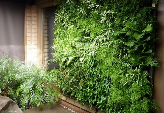 Pereti verzi si gradini verticale homeco