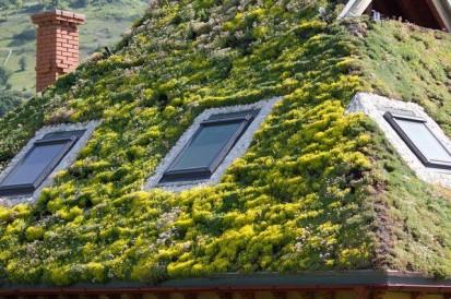 Evolutia acoperisului verde in 10 luni Evolutia acoperisului verde in 10 luni