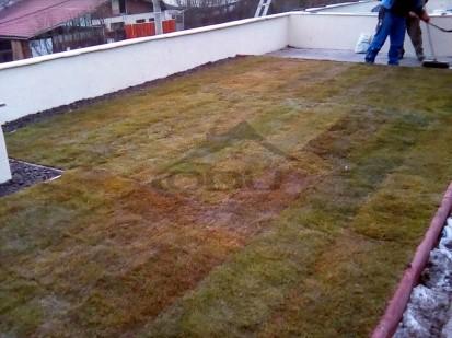 Terasa verde intensiva cu gazon in Cluj Terasa verde intensiva cu gazon - Cluj