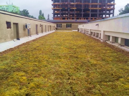 Acoperis verde extensiv 7 Acoperis verde extensiv pe o cladire comerciala renovata