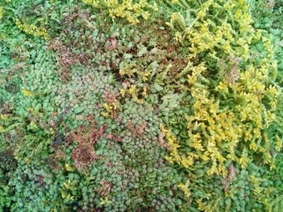 Acoperis verde extensiv 8 Acoperis verde extensiv pe o cladire comerciala renovata