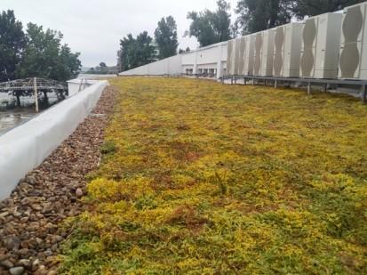 Acoperis verde extensiv 10 Acoperis verde extensiv pe o cladire comerciala renovata