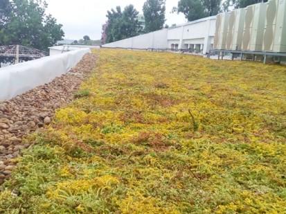 Acoperis verde extensiv 11 Acoperis verde extensiv pe o cladire comerciala renovata