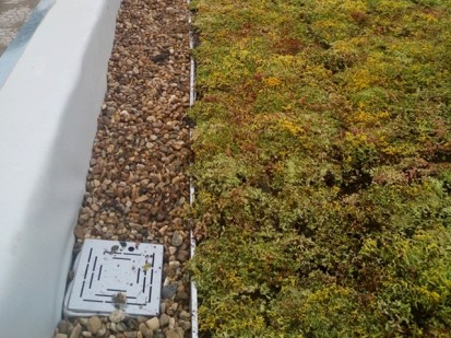 Acoperis verde extensiv 12 Acoperis verde extensiv pe o cladire comerciala renovata