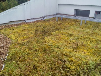 Acoperis verde extensiv 13 Acoperis verde extensiv pe o cladire comerciala renovata