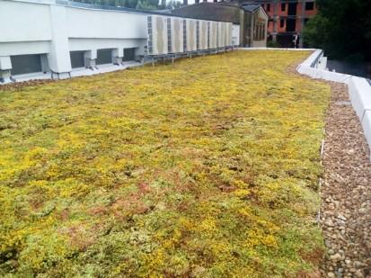 Acoperis verde extensiv 14 Acoperis verde extensiv pe o cladire comerciala renovata