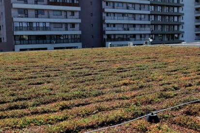 Acoperis verde extensiv Kaufland 1 Acoperis verde extensiv - Kaufland Bucuresti