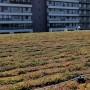 Acoperis verde extensiv Kaufland 1