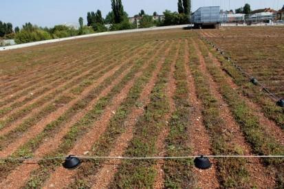 Acoperis verde extensiv Kaufland 3 Acoperis verde extensiv - Kaufland Bucuresti