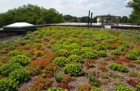 Sisteme de acoperis verde ODU GREEN ROOF realizeaza la cheie acoperisuri, terase verzi,