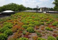 Sisteme de acoperis verde