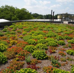 Sisteme de acoperis verde ODU GREEN ROOF