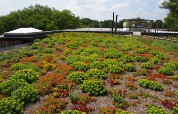 Sisteme de acoperis verde ODU GREEN ROOF realizeaza la cheie acoperisuri, terase verzi, intensive si extensive cu materiale de constructii durabile, folosind rulouri de vegetatie special cultivate pentru acoperis verde extensiva, intensiva sau de tip peisaj.