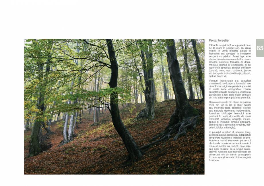 Pagina 67 - Zona Gorj - Ghid de arhitectura pentru incadrarea in specificul local din mediul rural  ...