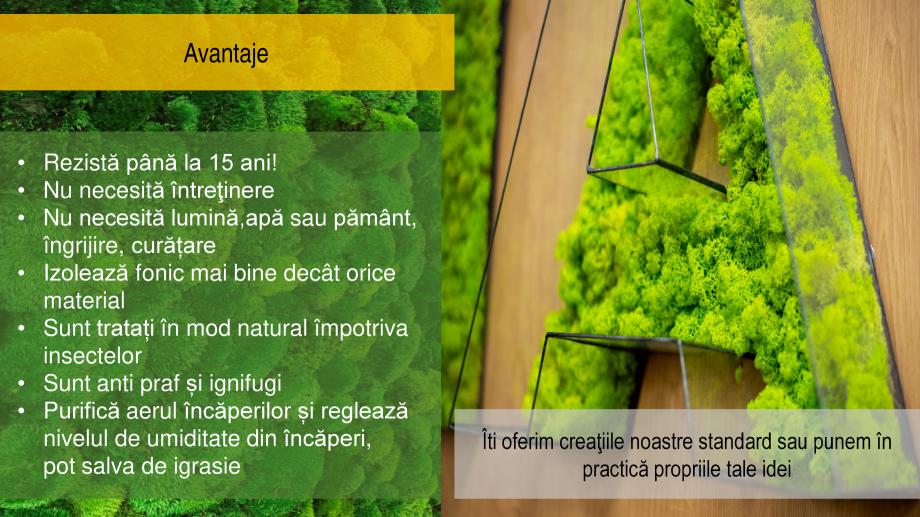 Pagina 3 - Amenajari interioare cu muschi si licheni stabilizati  Catalog, brosura Romana 22% a...