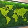 Continentele realizate din muschi stabilizati