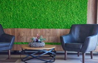 Pereti verzi cu licheni si muschi decorativi