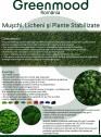 Intretinerea peretilor vegetali cu licheni, muschi sau plante stabilizate