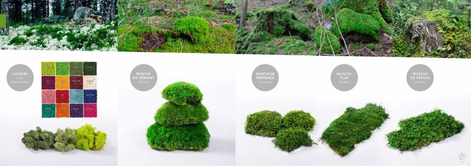 Pagina 27 - Prezentare generala pentru pereti vegetali cu licheni, muschi sau plante stabilizate ...