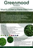 Intretinerea tablourilor din licheni, muschi sau plante stabilizate GREEN MOOD