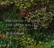 Plante stabilizate pentru tablouri decorative GREEN MOOD