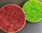 Obiecte decorative din licheni, muschi sau plante stabilizate GREEN MOOD