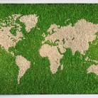 "Licheni ""Reindeer moss"" - Pereti vegetali GREEN MOOD"