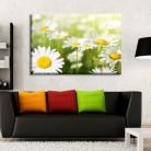 Tablou canvas 0181 - Tablouri Canvas 0104 - Natura