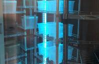 Executie camere frigorifice REPUBLIC INVEST