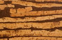 Parchet din pluta Proprietatile parchetului din pluta KROMSTON sunt convingatoare de la prima vedere: este natural, elastic, rezistent la presiune si uzura, durabil si usor de intretinut.