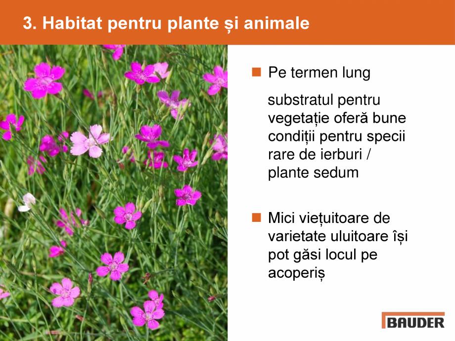 Catalog, brosura Argumente pentru un acoperis verde BAUDER Acoperis cu vegetatie extensiva, intensiva BAUDER  - Pagina 5