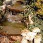 Amenajari de peisagistica, Baneasa Vlad  - Poza 7