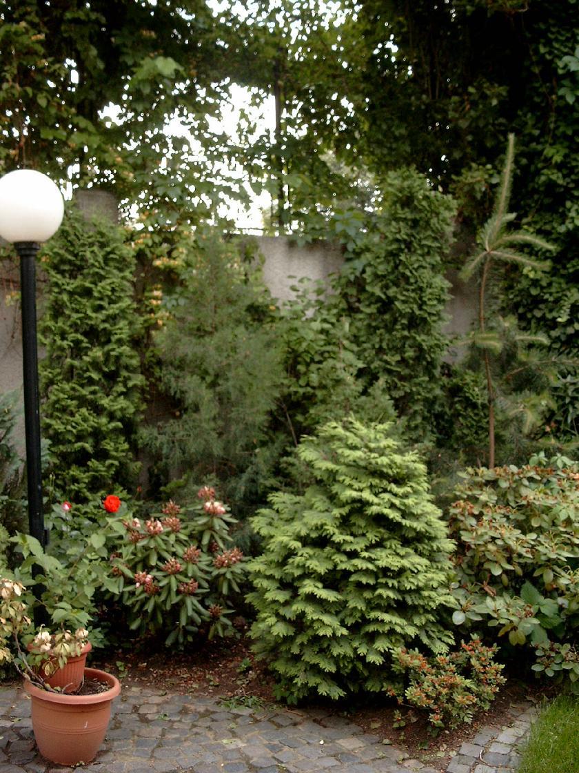 Amenajari de peisagistica, Dumbrava  - Poza 4