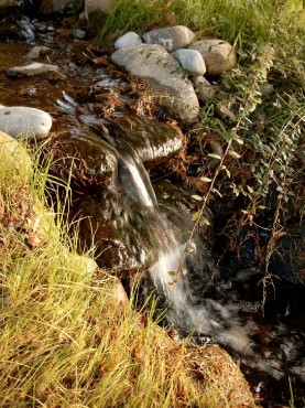 Lucrari, proiecte Amenajari de peisagistica, Snagov  - Poza 4