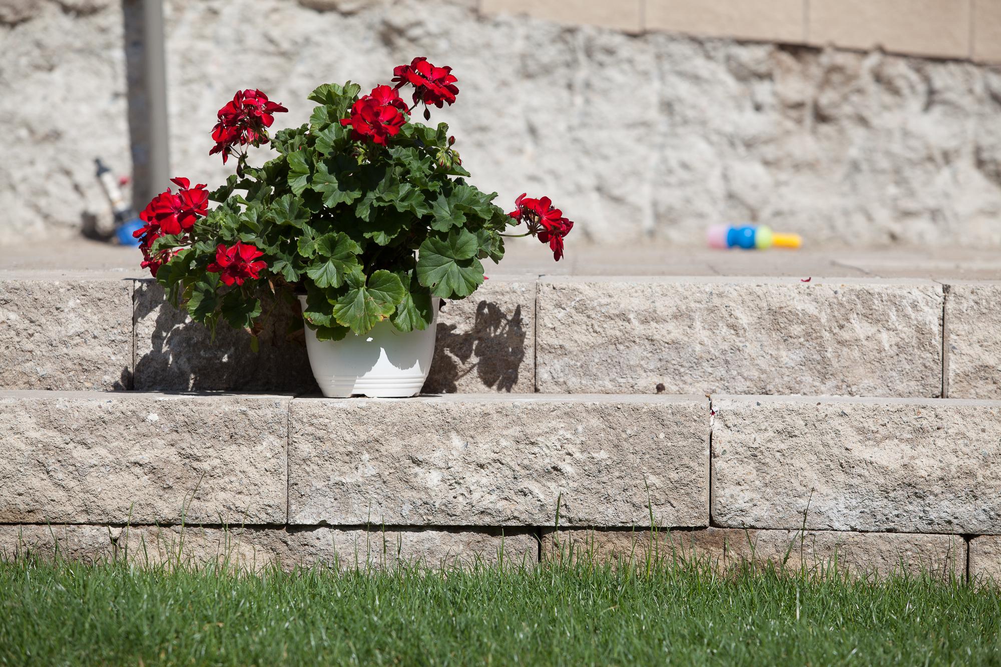 Elemente decorative din beton ELIS PAVAJE - Poza 12