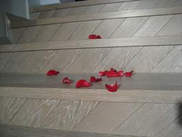 Trepte din lemn Indiferent de scara, din beton sau pe structura metalica, avem solutia ideala pentru a personaliza si pentru a crea o legatura intre scara si parchet, prin placarea cu trepte din lemn.
