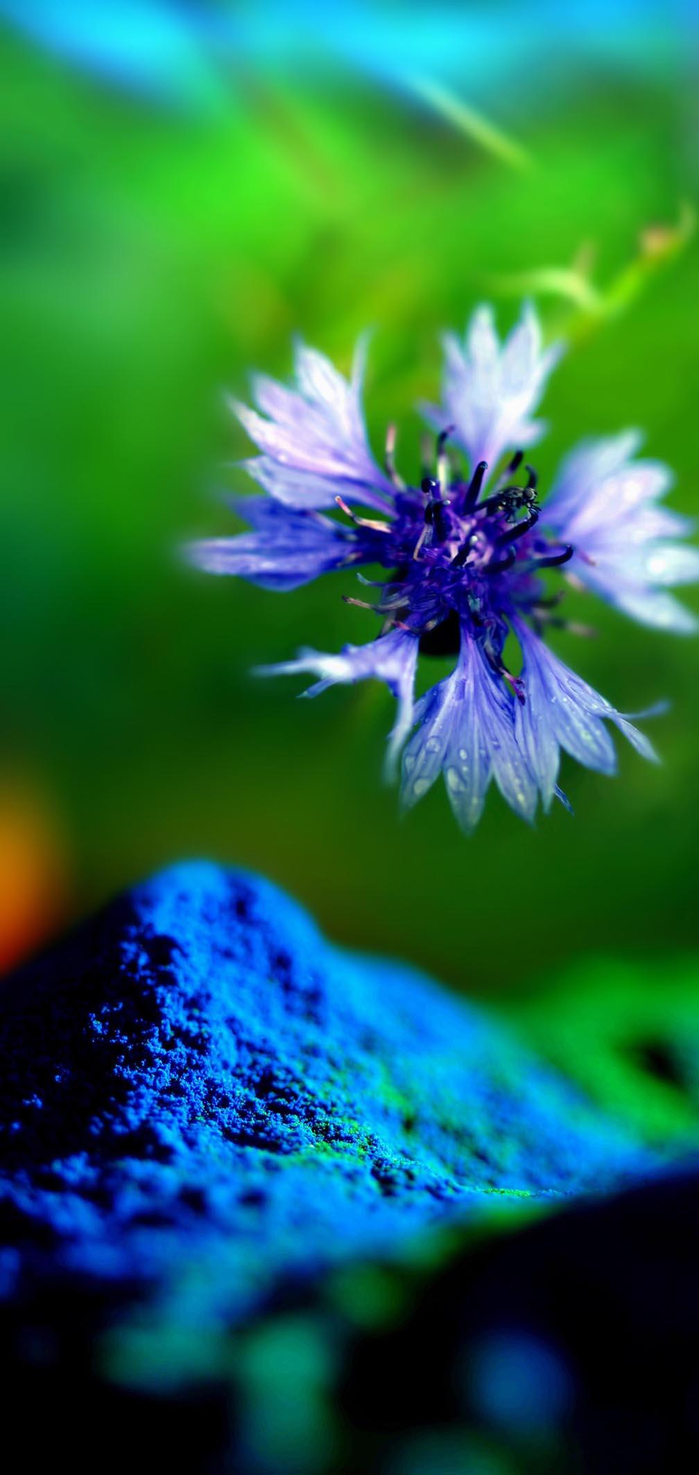 Colectiile de vopsele pulberi INTERPON - Poza 15