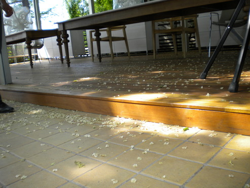 Lucrari de referinta Deck-uri lemn - Bangkirai SELVA FLOORS - Poza 14