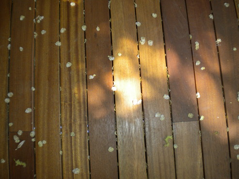 Deck-uri lemn - Bangkirai SELVA FLOORS - Poza 8