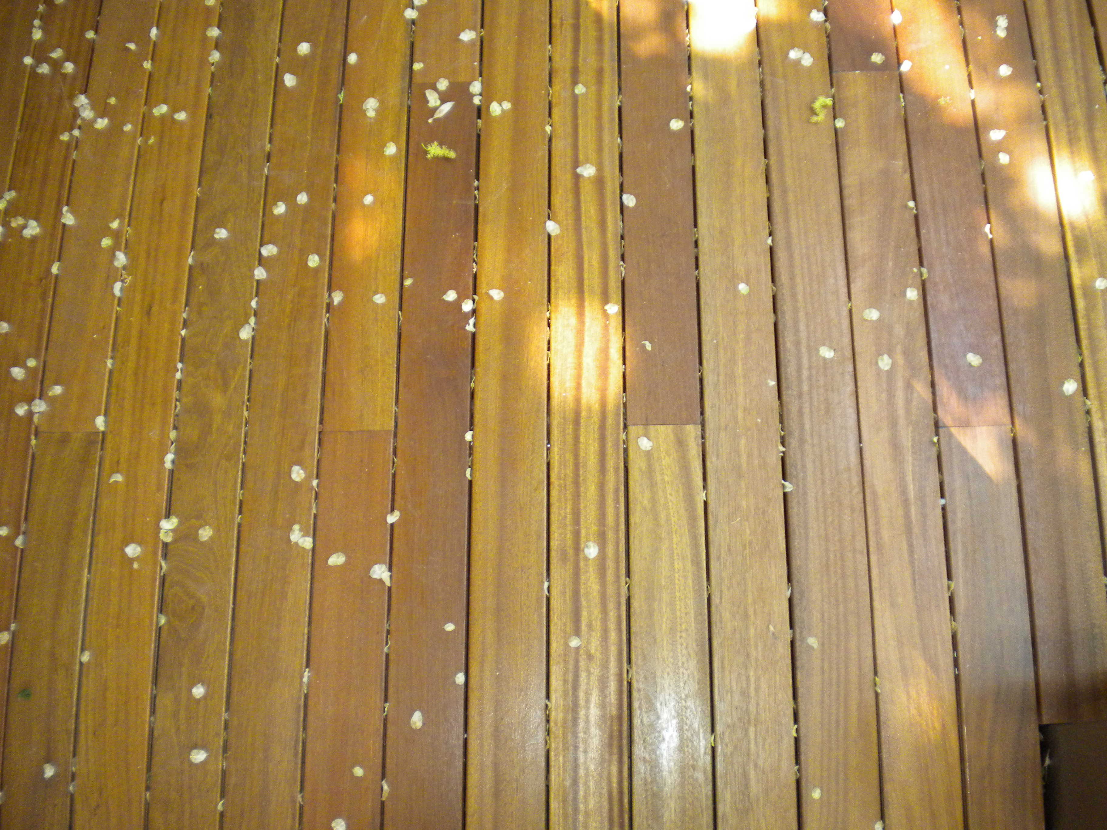 Deck-uri lemn - Bangkirai SELVA FLOORS - Poza 2