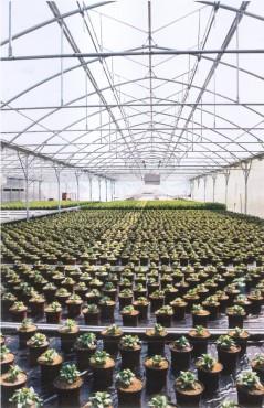 Sere cu deschidere dubla la culme MENATWORK AGRICOL - Poza 5