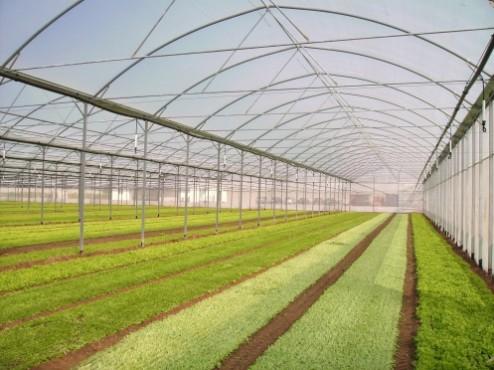 Sere, solarii MENATWORK AGRICOL - Poza 13