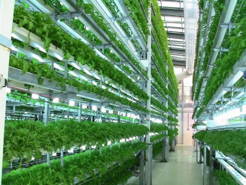 Sere, solarii MENATWORK AGRICOL - Poza 8