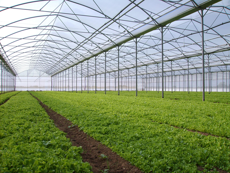 Solarii - Agronomia MENATWORK AGRICOL - Poza 1